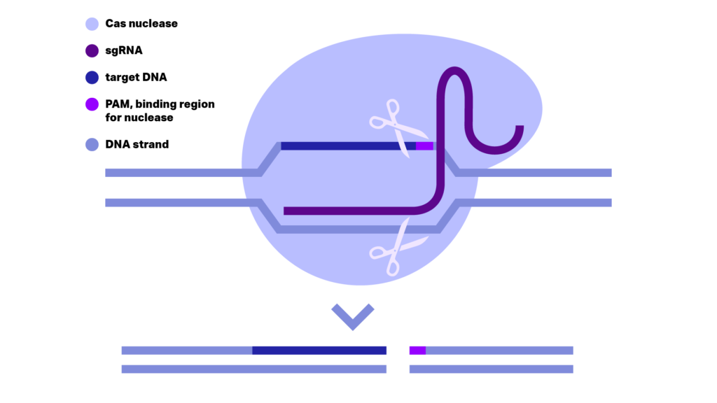 CRISPR-Cas9 Illustration. Kilobaser benchtop DNA synthesizer machine for in-house DNA synthesis