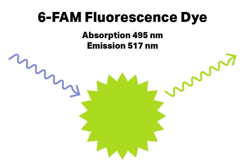 6-FAM Fluorescent dye, with absorption (495) and emssion (517). Used for DNA probe synthesis.