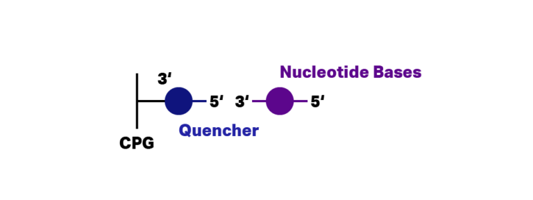 Quencher bound on CPG column during DNA probe synthesis. Nucleotide bases in solution about to bind on Quencher.