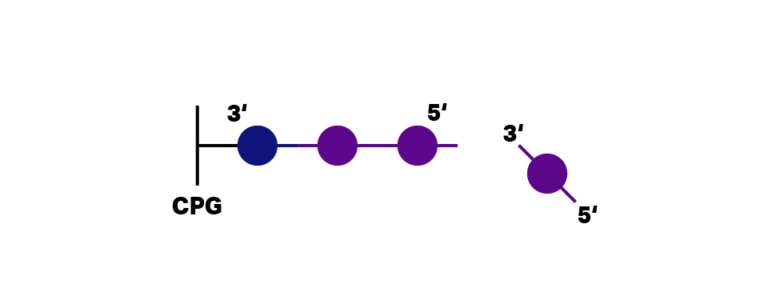 DNA probe, with quencher, bound on CPG column during synthesis. Nucleotide base in solution about to bind on DNA sequence.